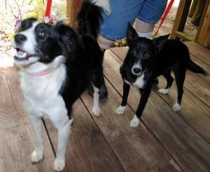 Oreo and Ebony, Rescued Pups