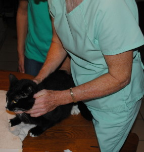 Iris, the cat, is examined by Dr. Juday