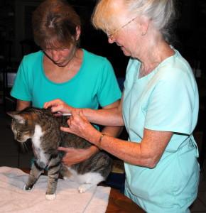 Cat receiving vaccinations
