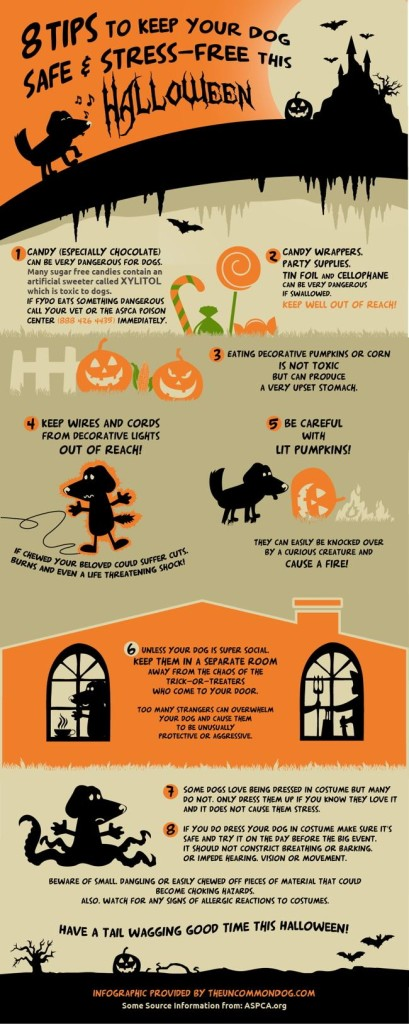 Take care of pets on Halloween