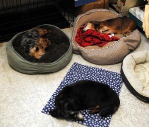 Senior dogs in rescue
